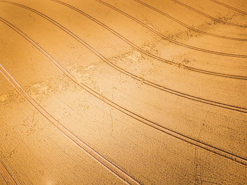 Aerial view of a cereal crop in the field shortly before harvest