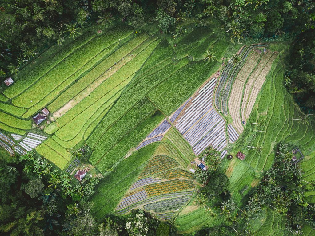 Aerial view of rice terraces and terraced agricultural land in the tropics