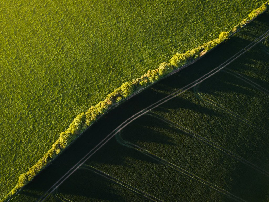 Aerial view of hedgerow at sunset casting a deep shadow over a green field