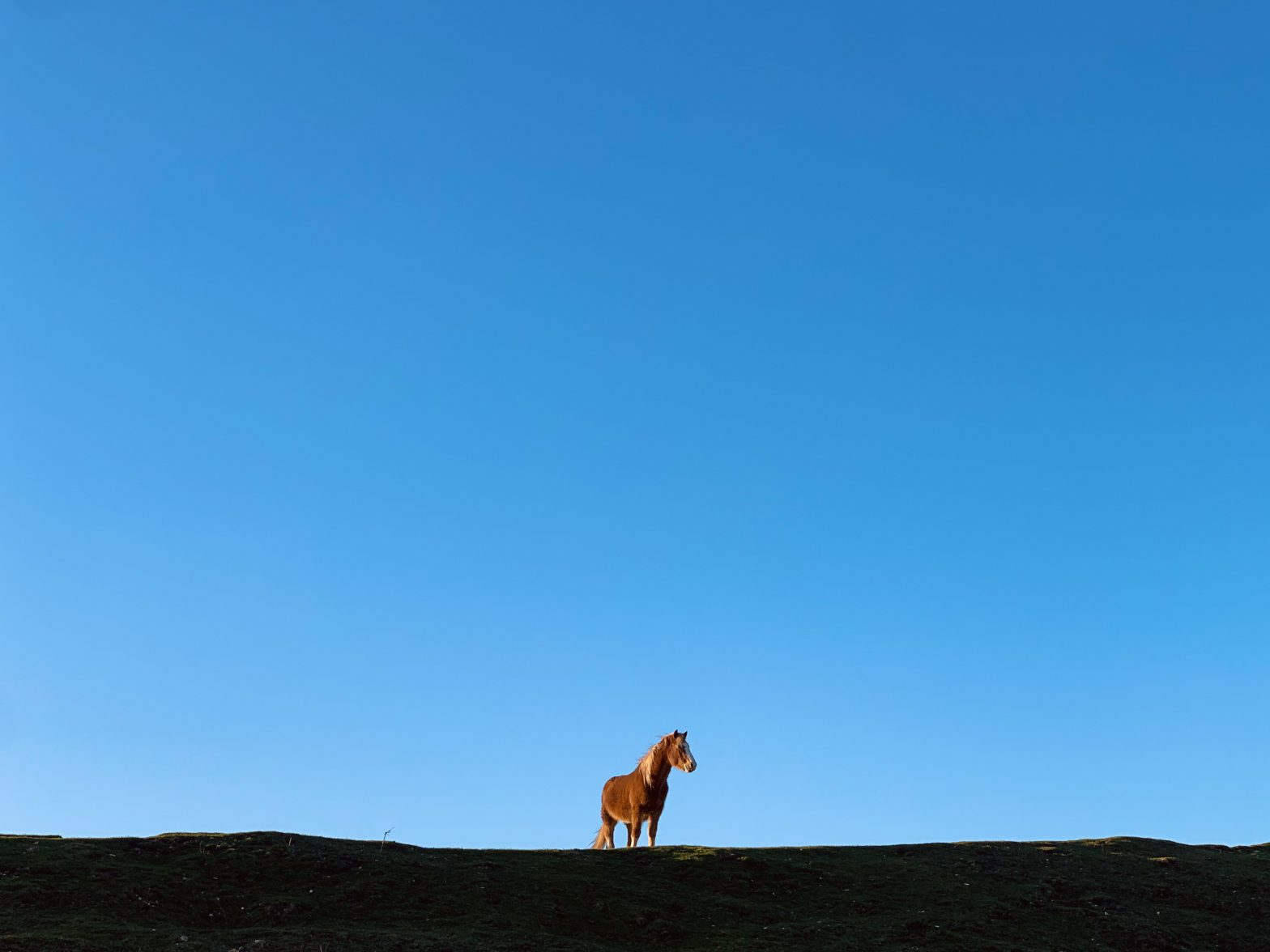Brown horse agains a backdrop of blue sky
