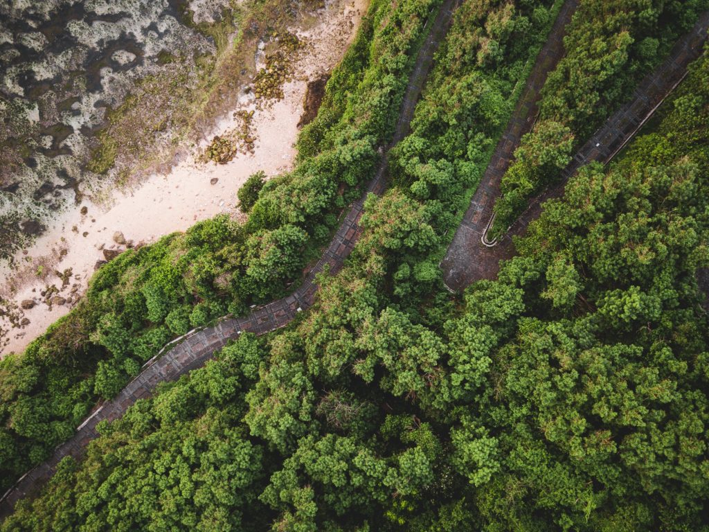 Aerial view of lush green trees growing by the beach