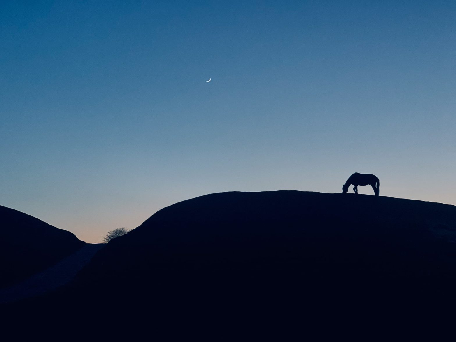 Silhouette of a horse on the hill late in the evening with moon crescent in the sky