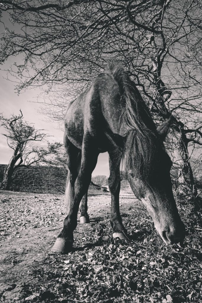 A horse in the countryside looking directly at the camera with a surprised expression