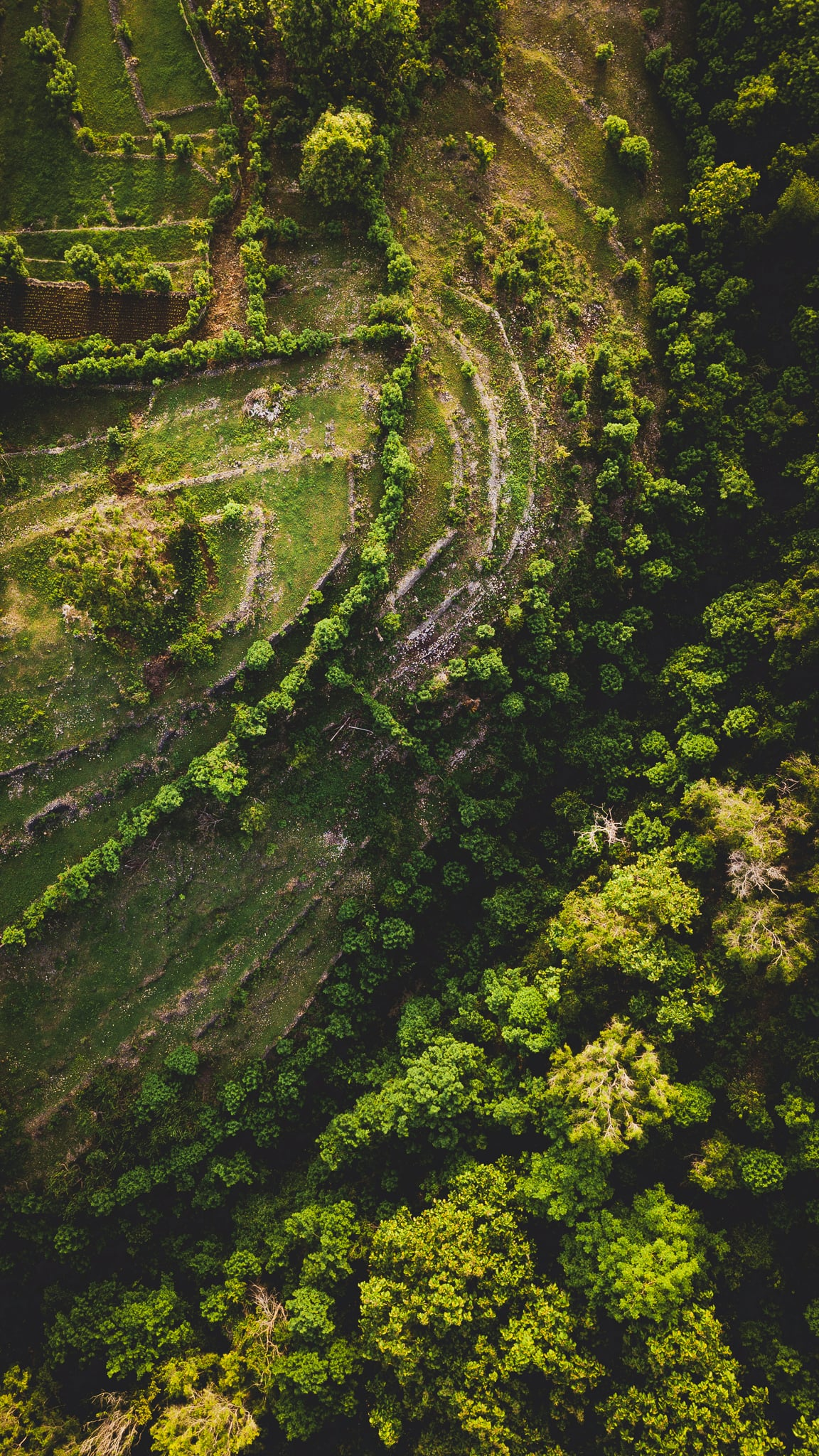Aerial view of agricultural terraces on the slopes of a hill with trees growing from the bottom of a valley