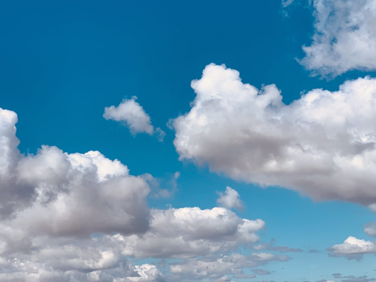 Clouds in the bright blue sky with a flock of birds flying through