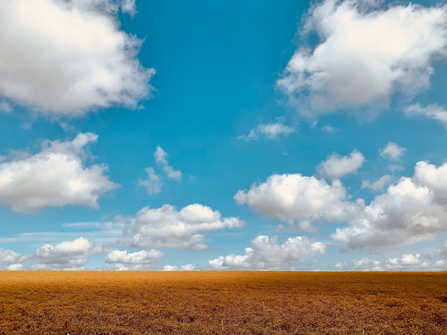 Clouds in the bright blue sky over an orange field with a cereal crop ready for harvest