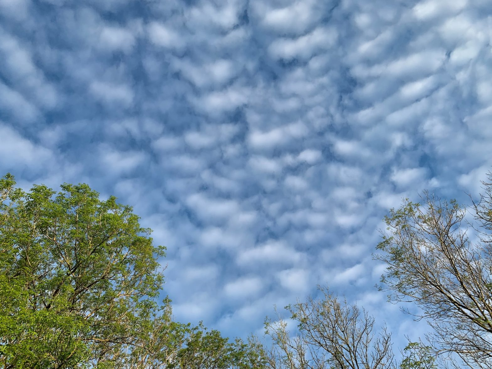 Scattered clouds in the sky framed by the treetops